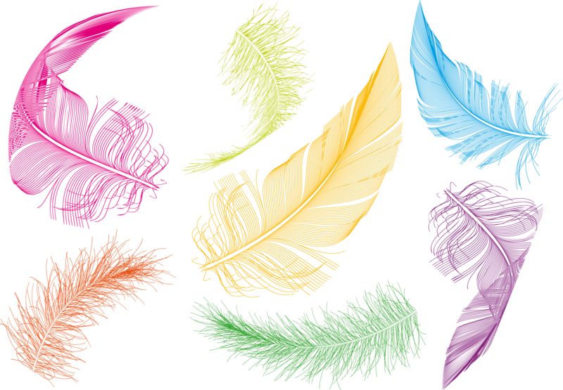 Feather clipart colorful feather. Bird goose clip art