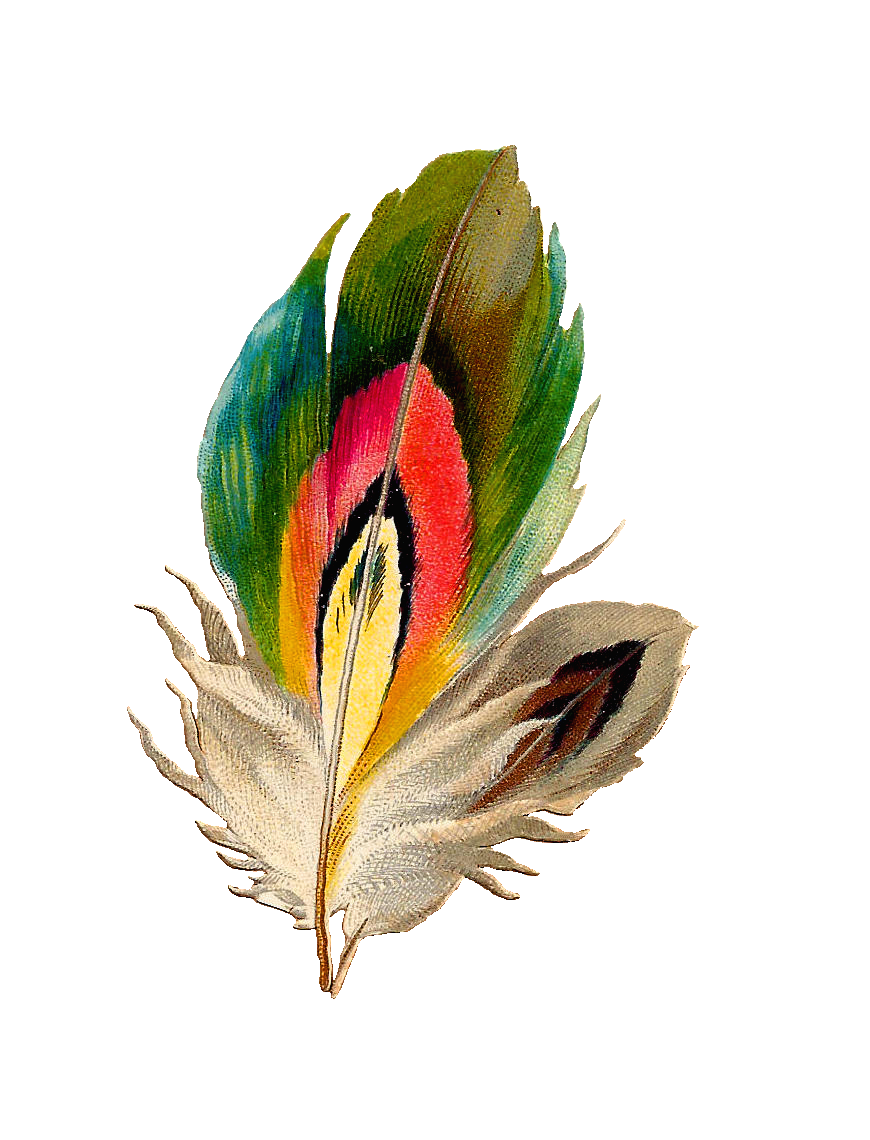 Antique images graphic beautiful. Feather clipart colorful feather