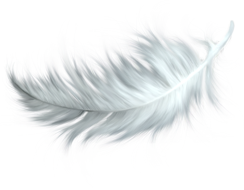 Hd png transparent images. Feather clipart colourful feather