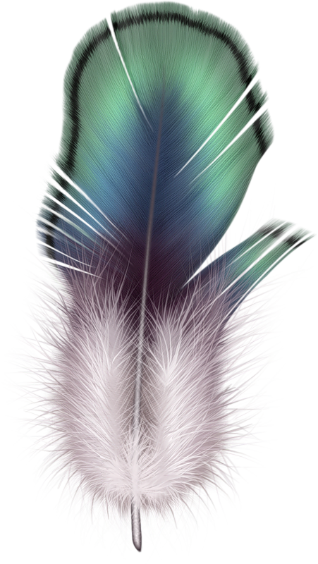 Png pinterest feathers watercolor. Feather clipart colourful feather