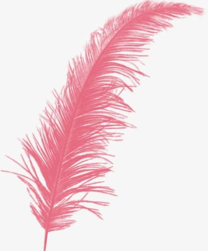 Feather clipart creative. Wings png close up