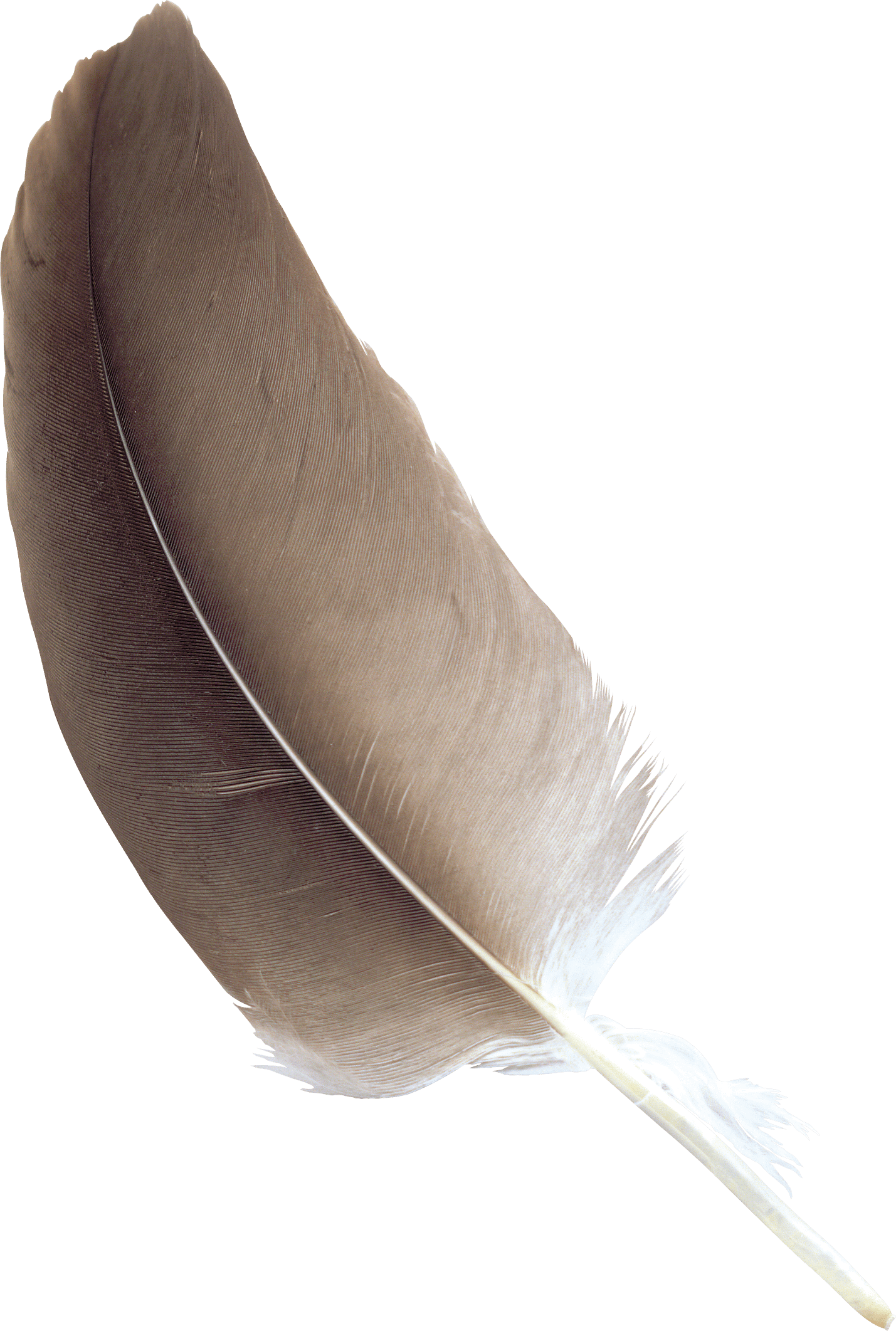 Feather clipart creative. Brown transparent png stickpng