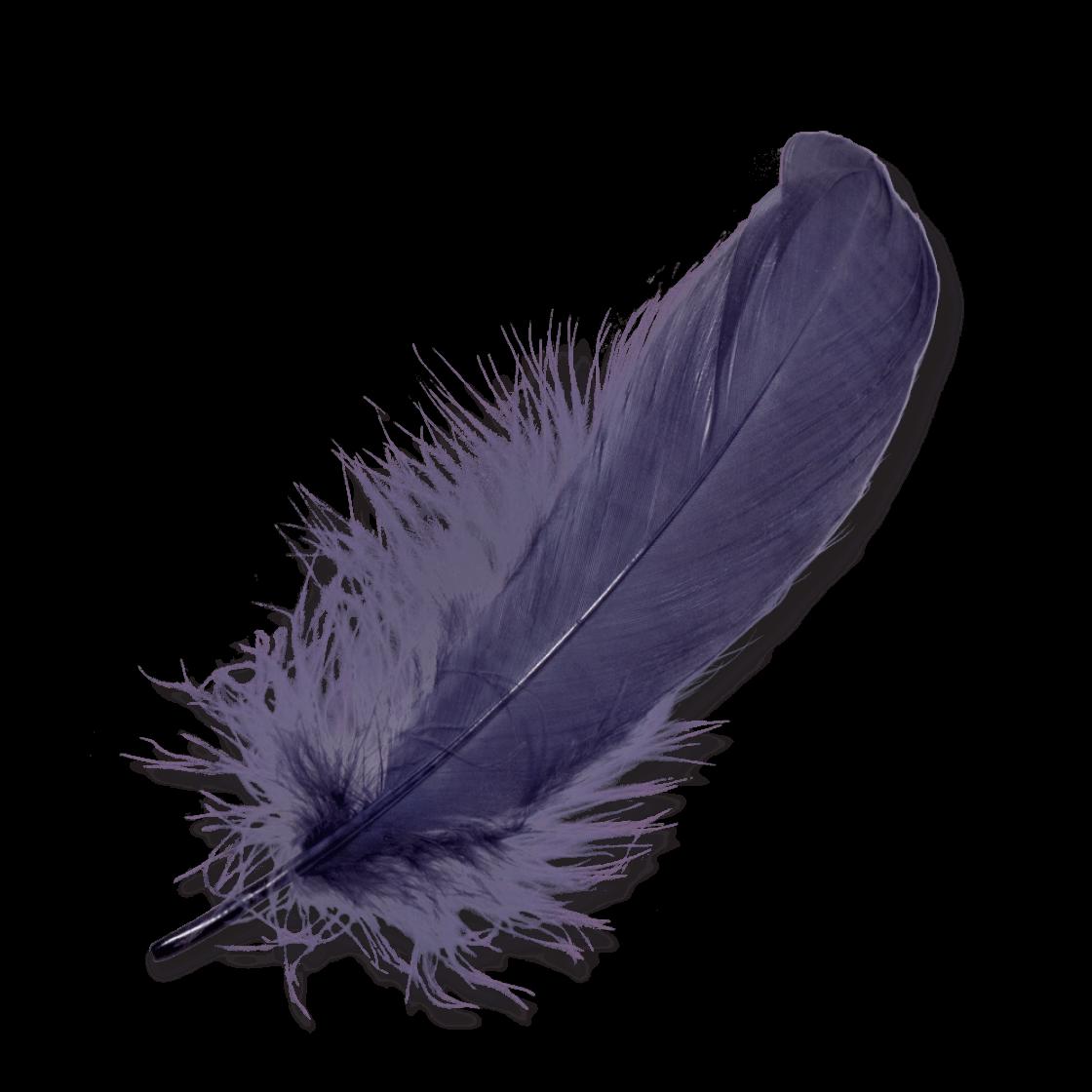 Purple transparent png stickpng. Feather clipart creative