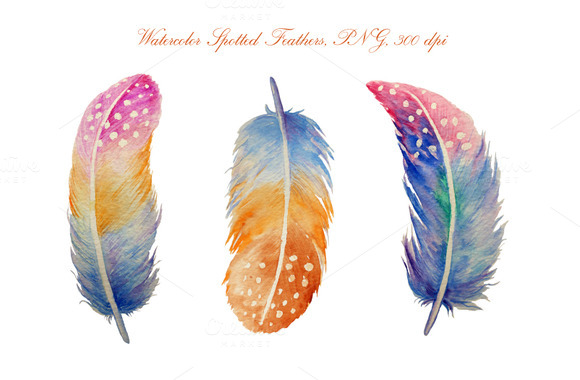 Watercolor spotted feathers illustrations. Feather clipart creative