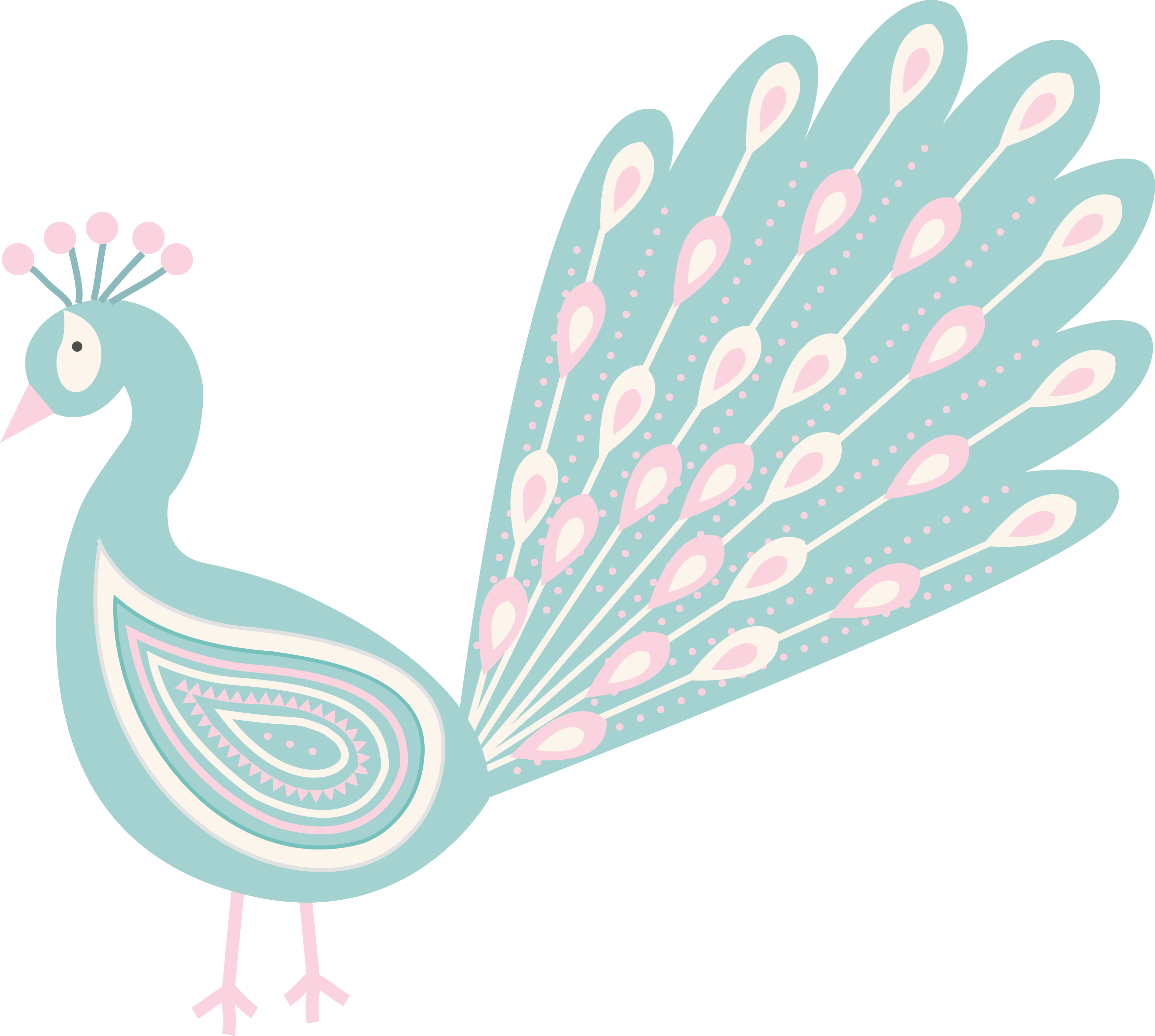 Feather clipart duck feather. Cartoon peafowl peacock transprent