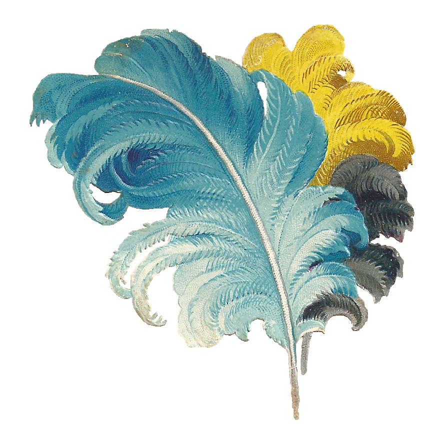 Feather clipart flower.  collection of ostrich