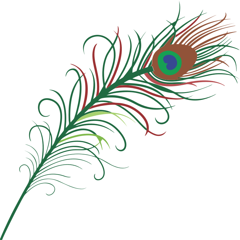 Peacock medium image png. Feather clipart kid