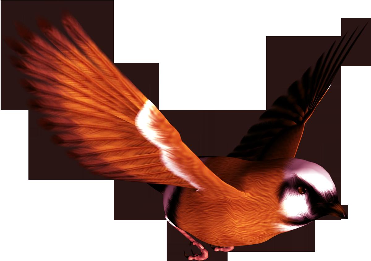 Bird png . Feather clipart lightweight