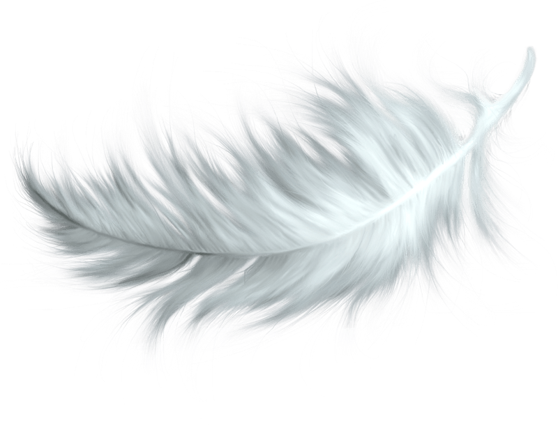 Feathers clipart lightweight. Png free transparent images