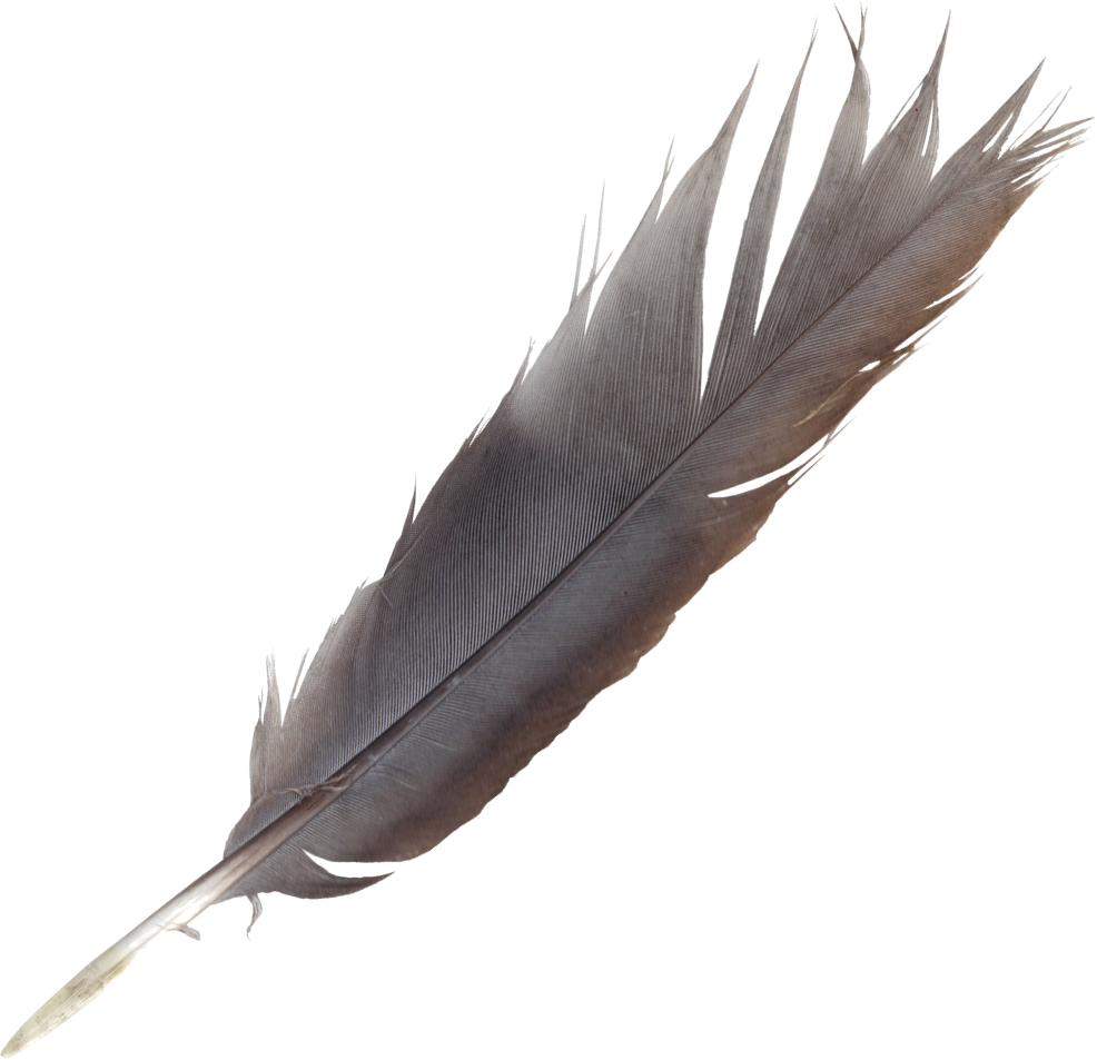 Png free transparent images. Feathers clipart lightweight
