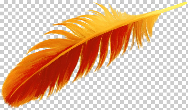 Feather clipart orange feather. Bird beautiful png