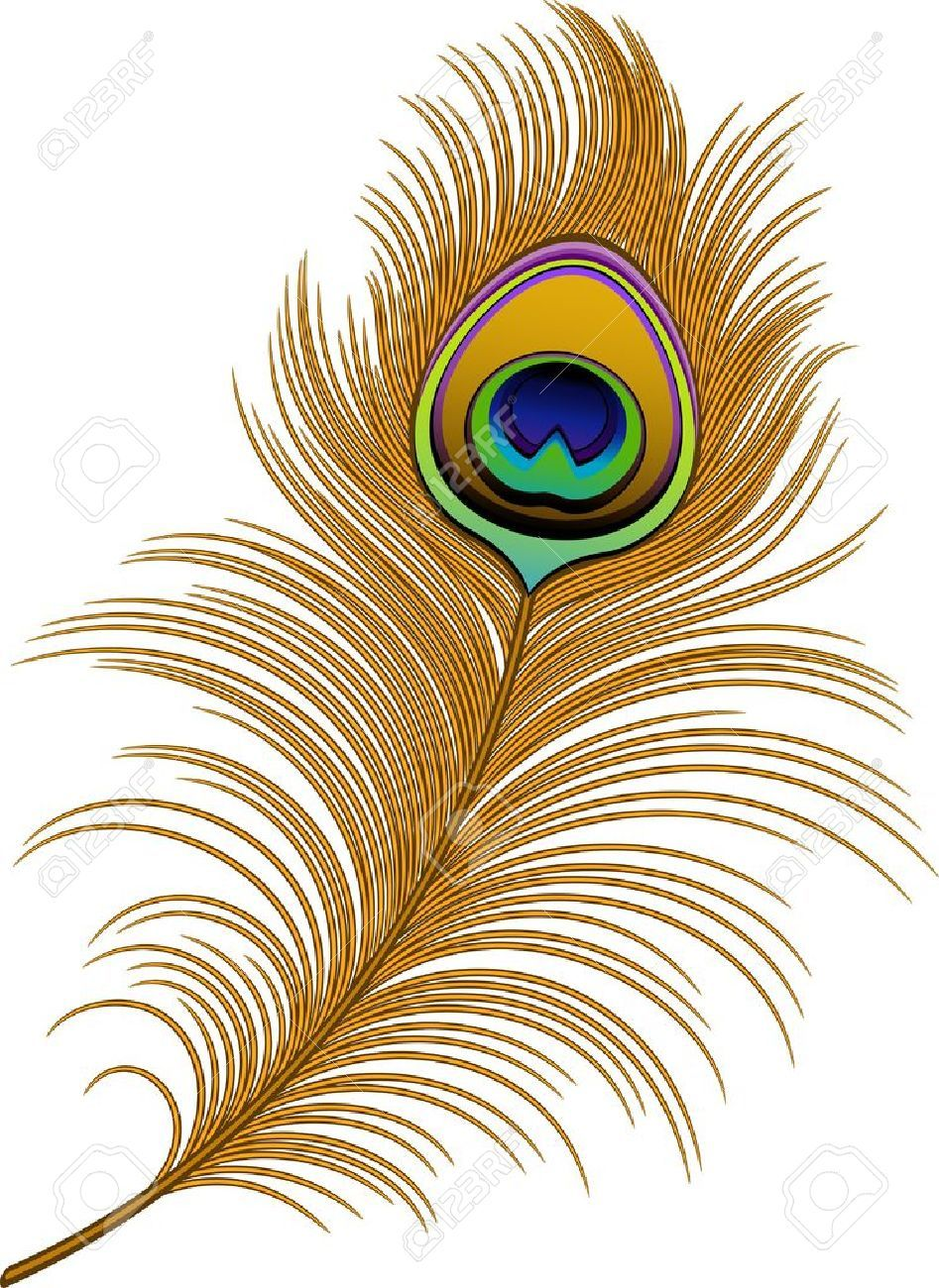 Feather clipart paisley peacock. Stock vector beautiful in