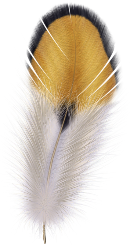 Feather clipart pencil. Png feathers clip art