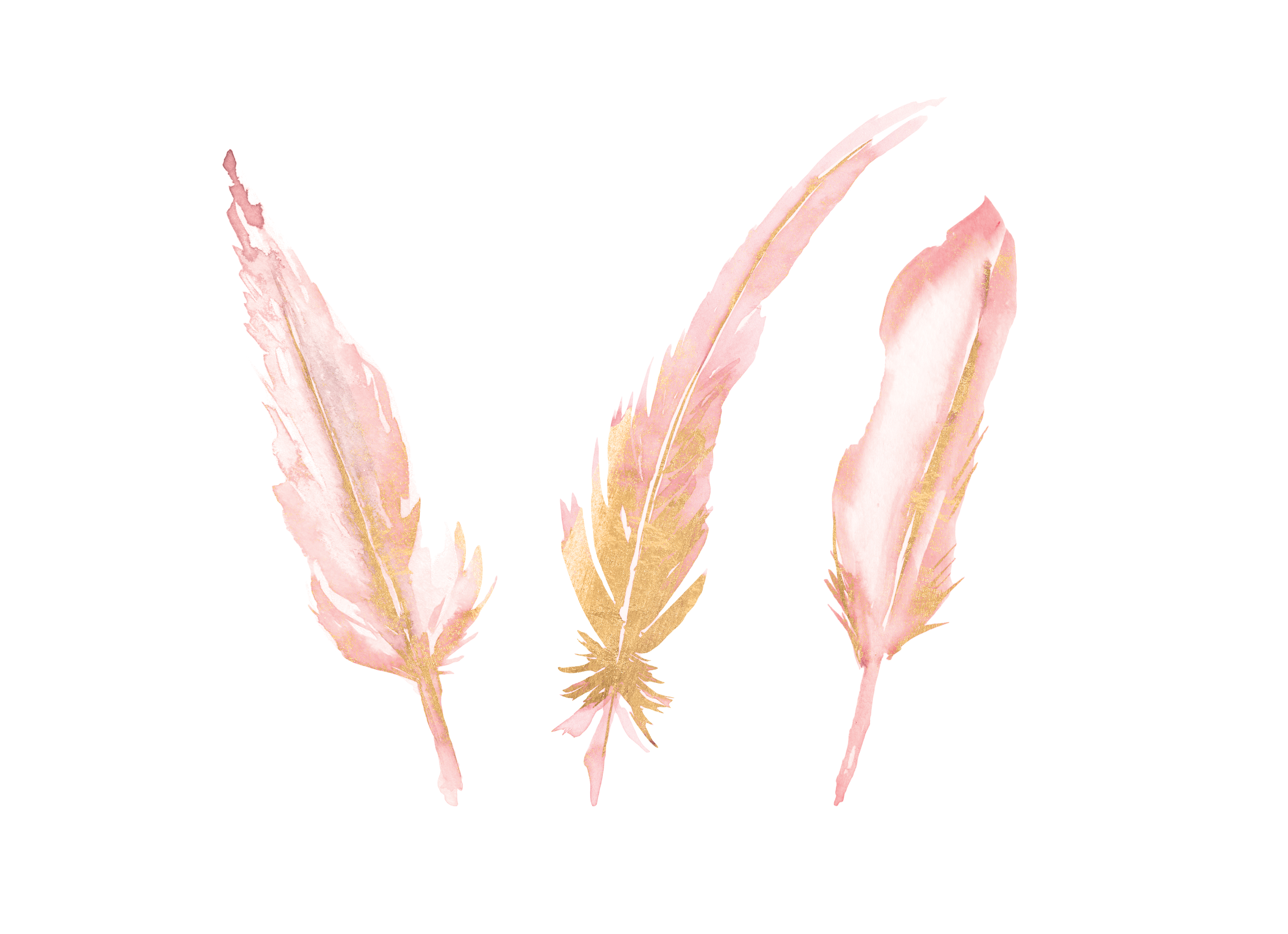Watercolor blush pink . Feather clipart rose gold