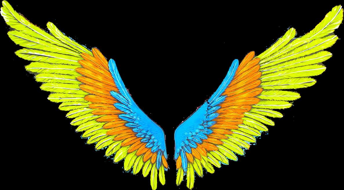 Wings asas tumblr sticker. Wing clipart picsart
