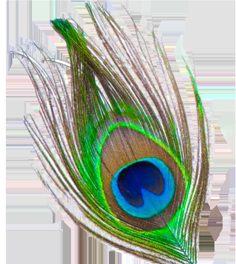 Flutes clipart janmashtami. Peacock feather png transparent