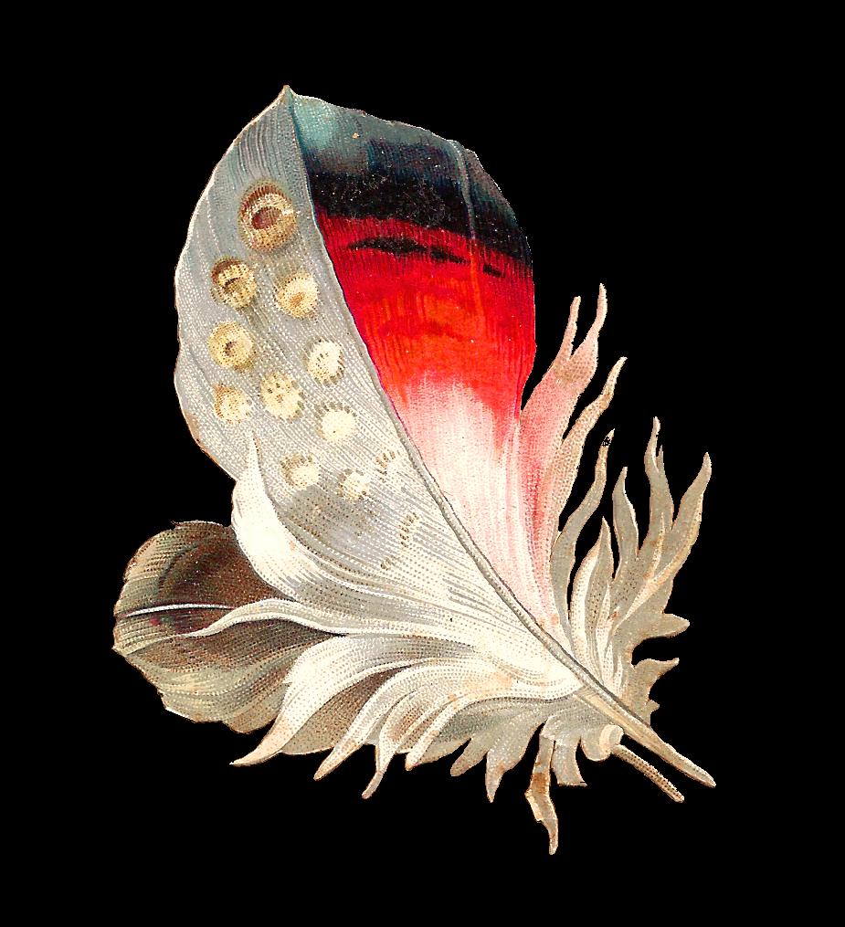 Feather clipart victorian. Antique images clip art