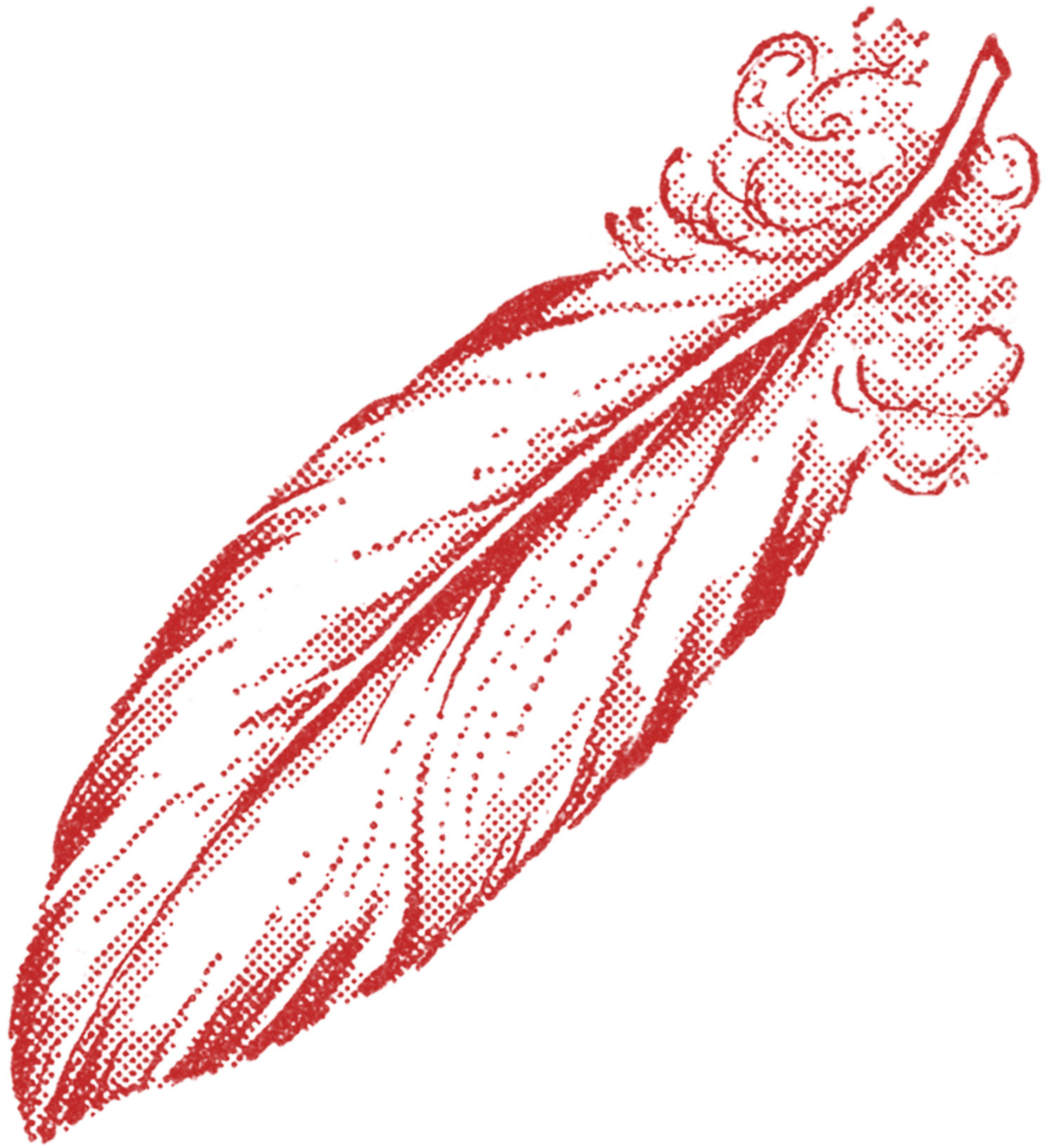 Feathers clipart victorian. Feather illustrations the graphics