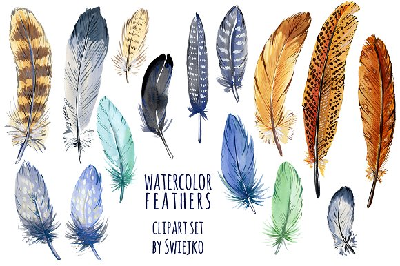 Feather clipart. Watercolor illustrations creative market