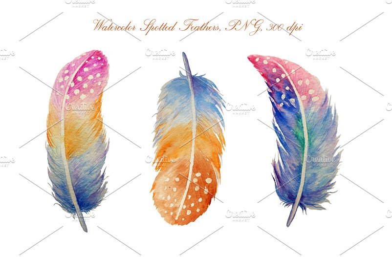 Feathers clipart. Watercolor spotted illustrations creative