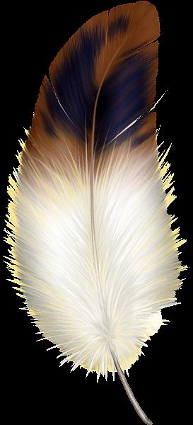Y la pluma blanca. Feathers clipart brown