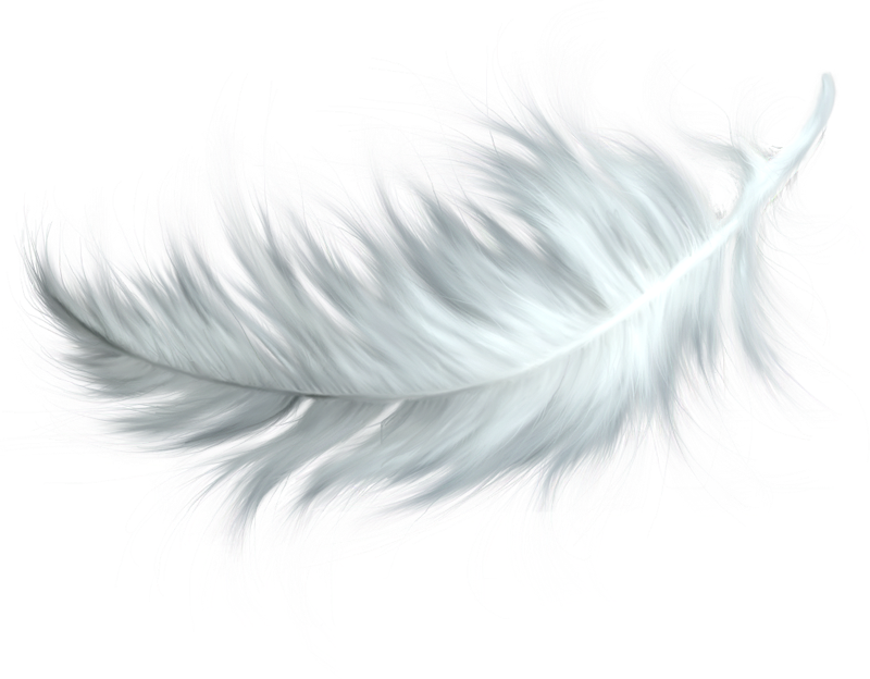 Feathers clipart easy. Image result for feather