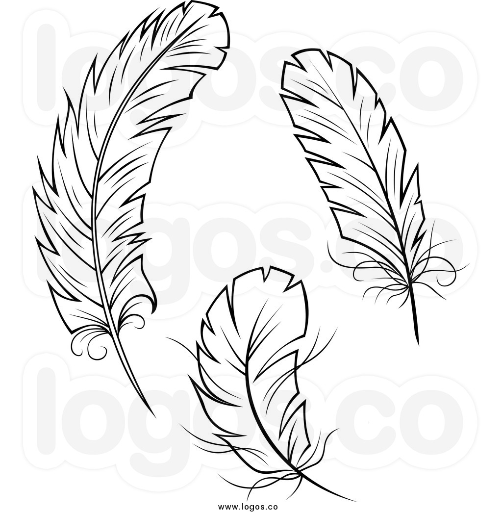 Feathers clipart fether.  clip art clipartlook