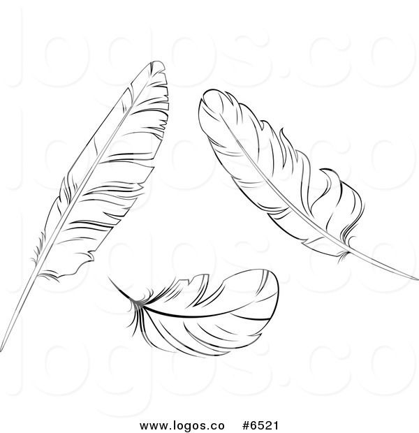 Pin by carolyn hunt. Feathers clipart logo