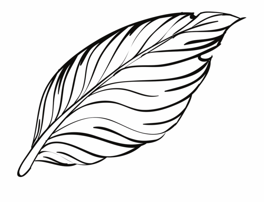 Pen bird animal beautiful. Feathers clipart outline
