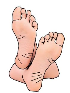 Feet clipart bottom foot.  best images in