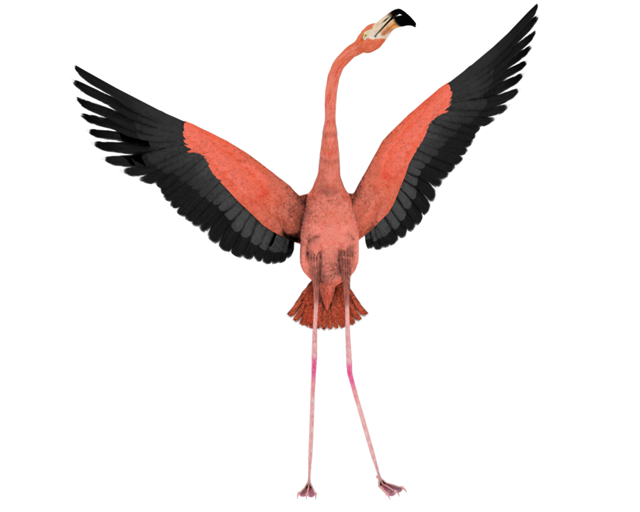 Png image with transparent. Foot clipart flamingo
