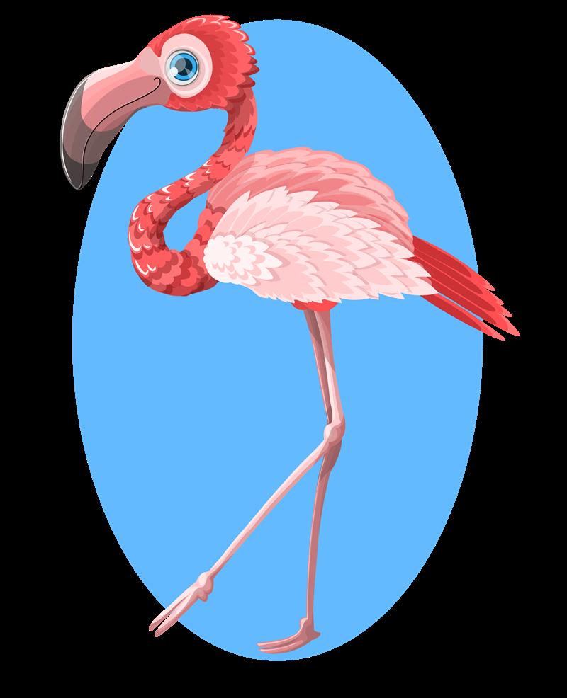 Cute clip art billigakontaktlinser. Foot clipart flamingo