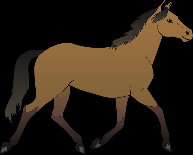 Free wild download clip. Horses clipart morgan horse