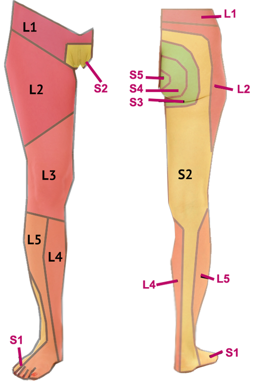 Images of dermatomes extremity. Foot clipart lower limb