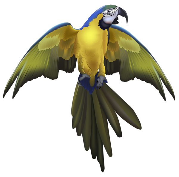 Feet clipart parrot. Large png picture animals