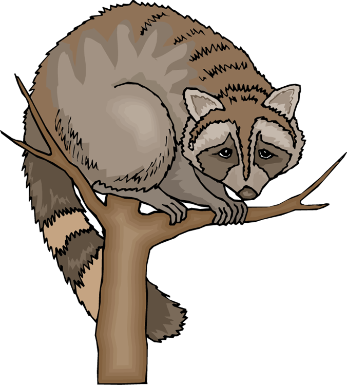 Raccoon free on dumielauxepices. Racoon clipart grey object