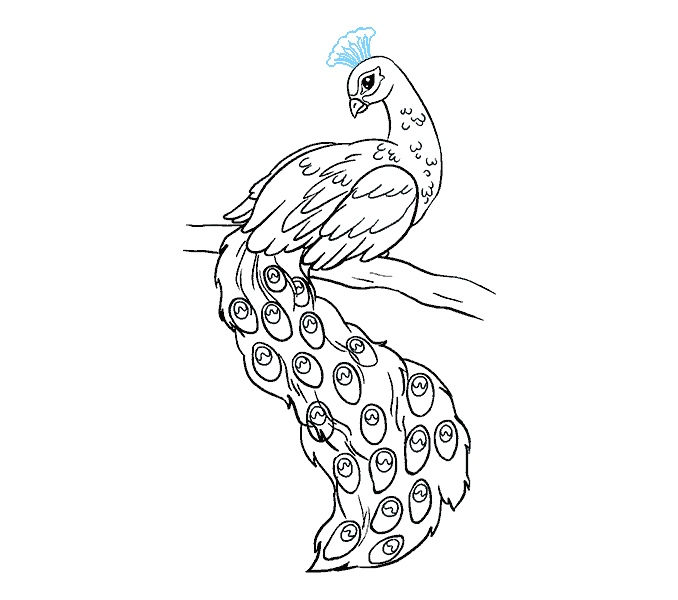 Peacock image drawing at. Nest clipart sketch bird