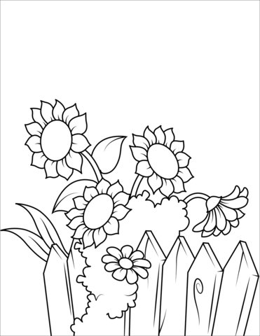 Sunflowers near the coloring. Fence clipart colouring