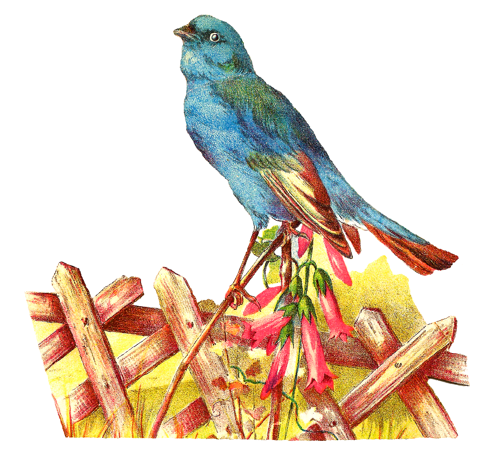 Pet clipart blue bird. Antique images november this