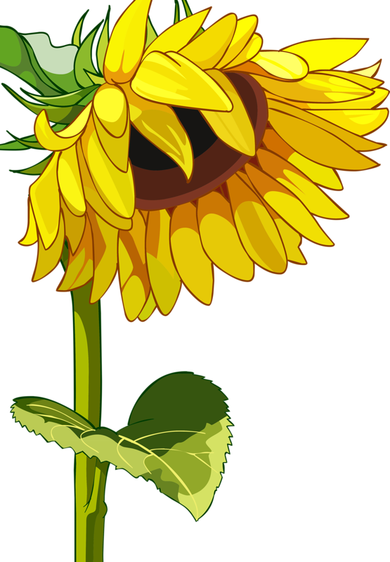 png flower clip. Fence clipart sunflower