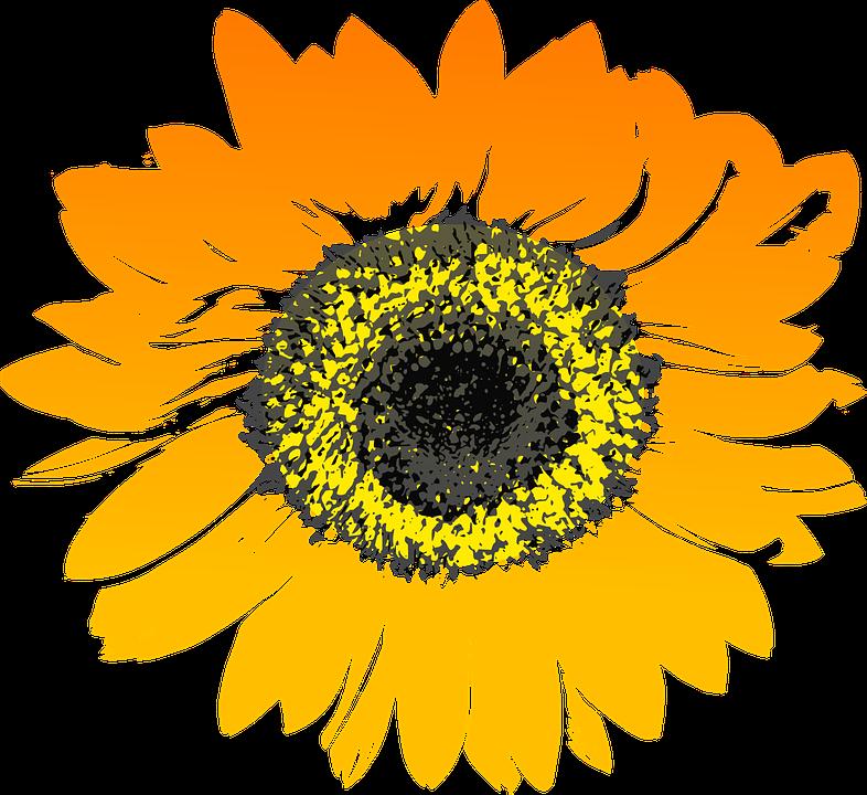 Fence clipart sunflower. Painting http picturesofbeautifulflowers com