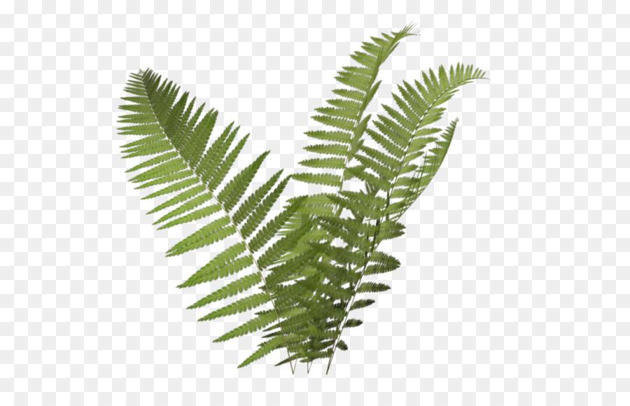 Plant burknar clip art. Fern clipart