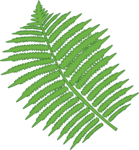 Fern clipart. Free cliparts download clip