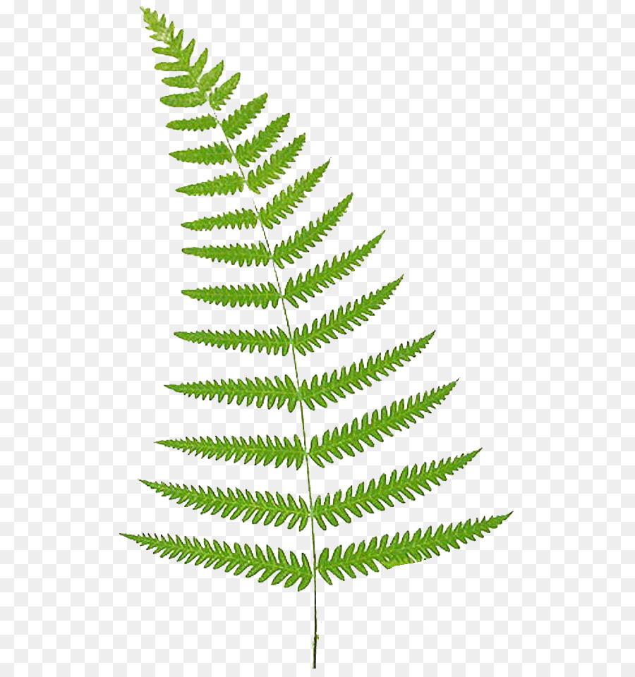 Grass background plant leaf. Fern clipart