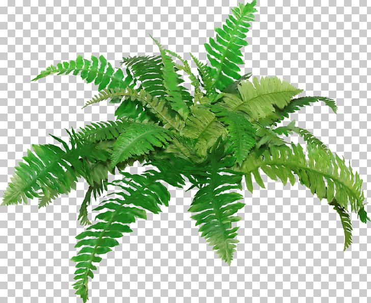 Fern clipart academic. Png clip art drawing