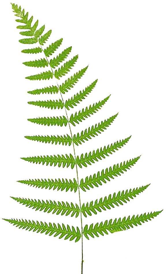 Fern clipart all blacks. Leaping frog designs free