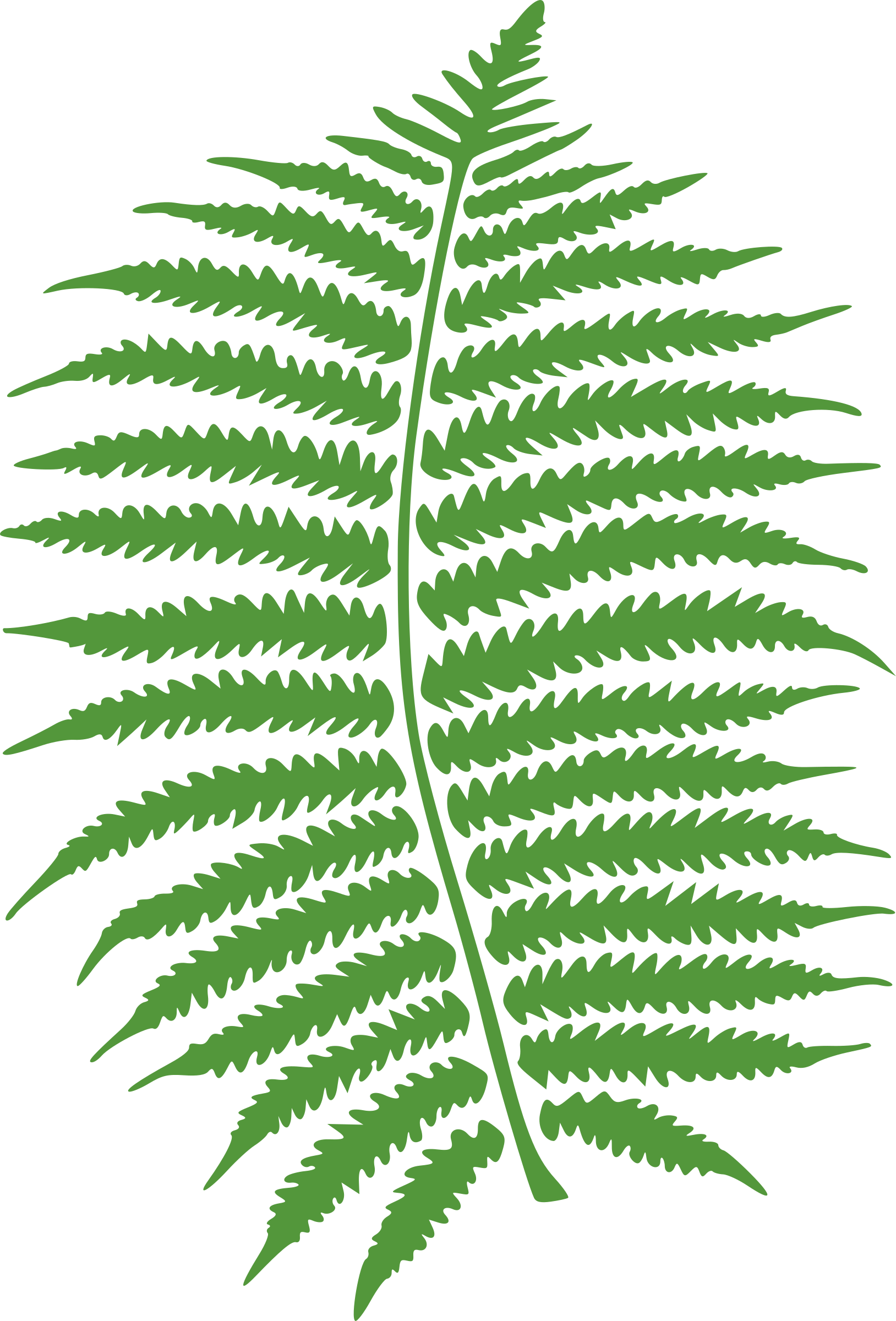 Fern clipart all blacks. Icons png free and
