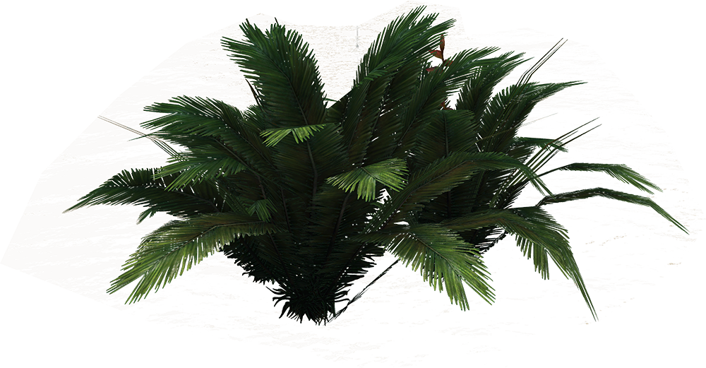 Png ferns free icons. Palm clipart fern