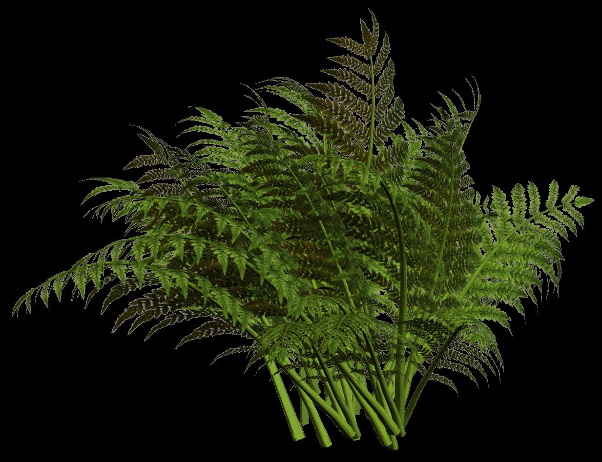 Woodland clipart fern leaf.  r nature time