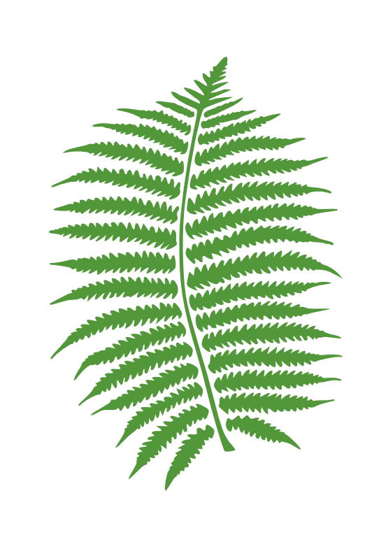 Panda free images fernclipart. Palm clipart fern
